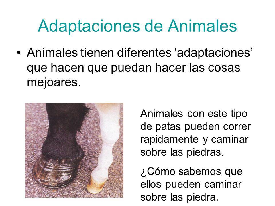 Adaptaciones de Animales