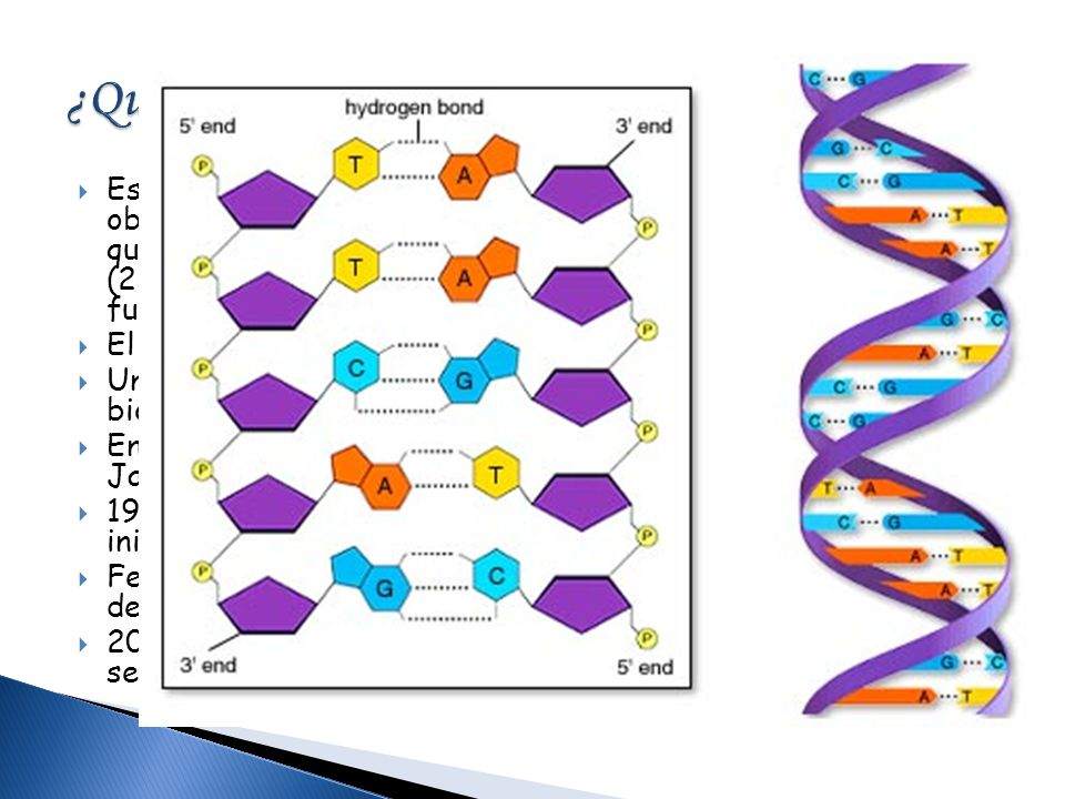 ¿Qué es el Proyecto Genoma Humano (PGH)