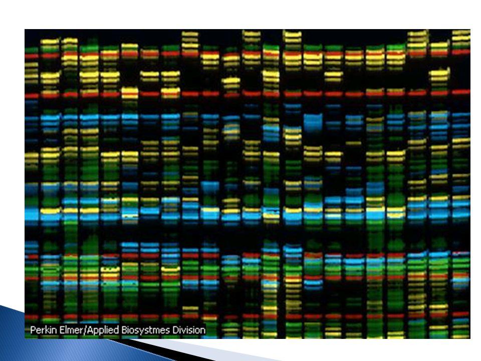 Objetivos del estudio del genoma humano
