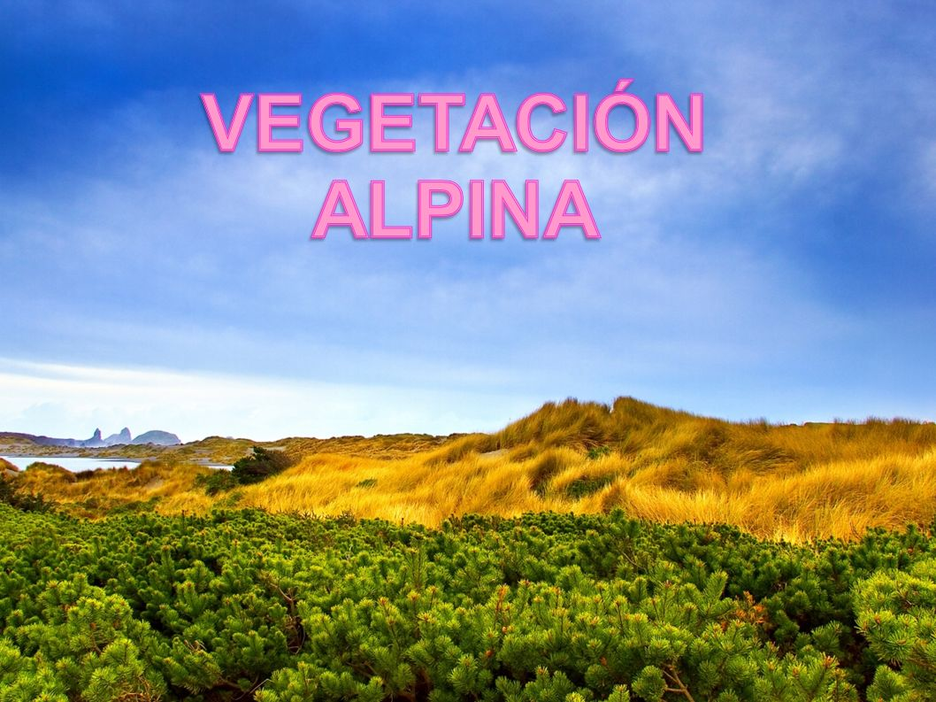 VEGETACIÓN ALPINA