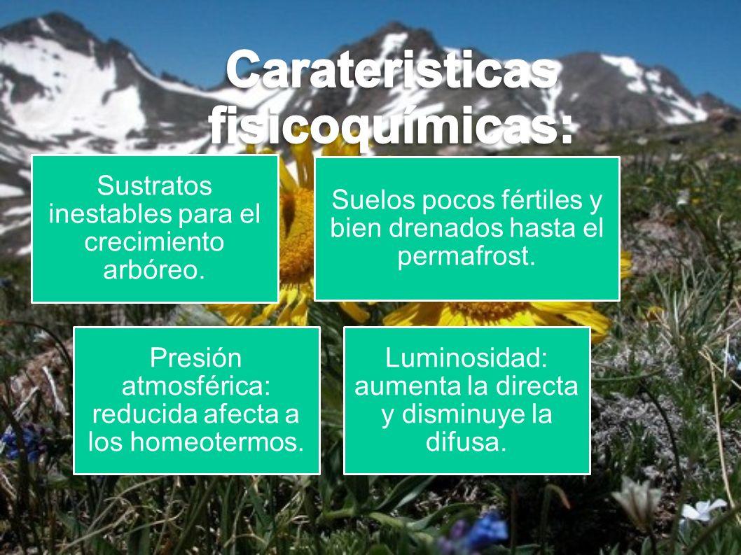 Carateristicas fisicoquímicas: