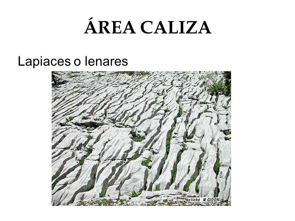 ÁREA CALIZA Lapiaces o lenares