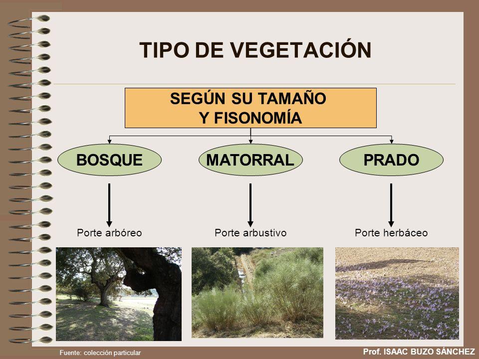 TIPO DE VEGETACIÓN SEGÚN SU TAMAÑO Y FISONOMÍA BOSQUE MATORRAL PRADO