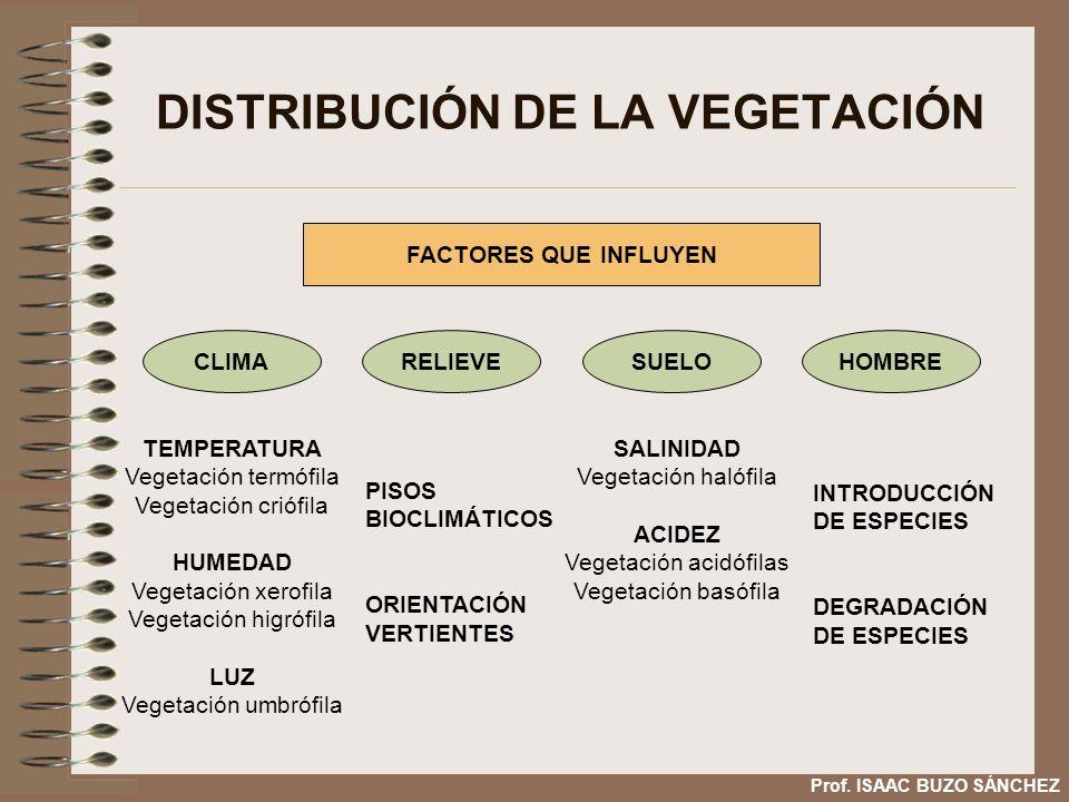 DISTRIBUCIÓN DE LA VEGETACIÓN