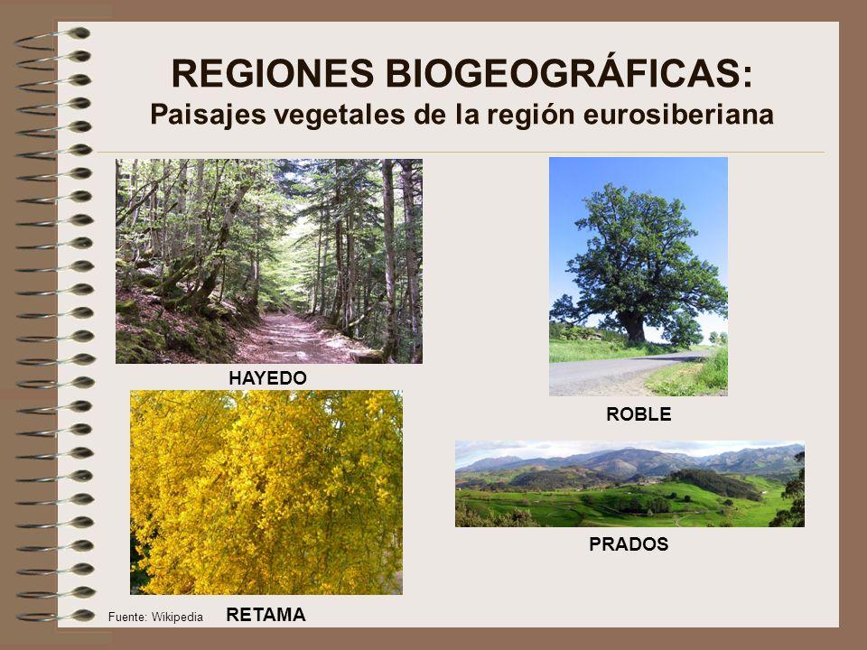 REGIONES BIOGEOGRÁFICAS: Paisajes vegetales de la región eurosiberiana