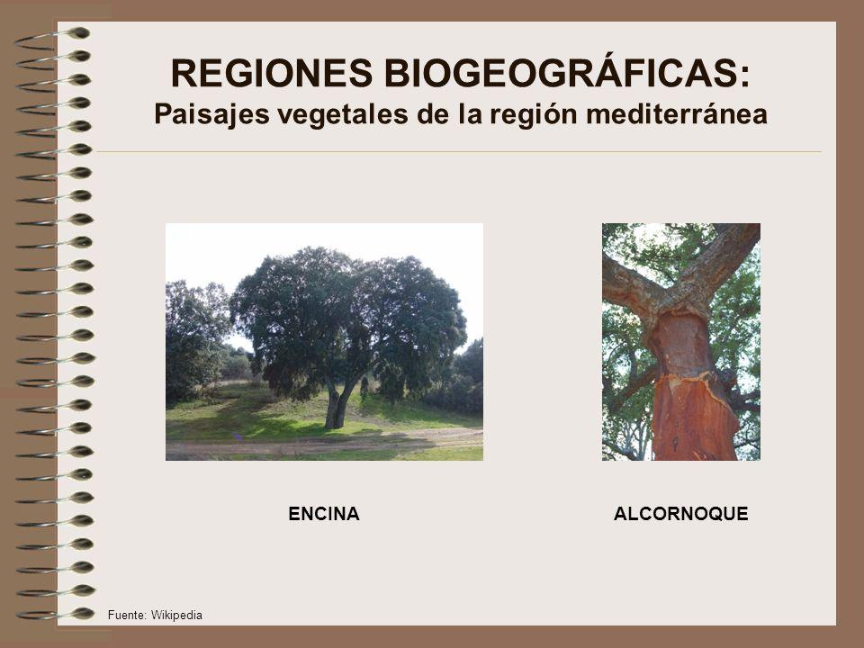 REGIONES BIOGEOGRÁFICAS: Paisajes vegetales de la región mediterránea