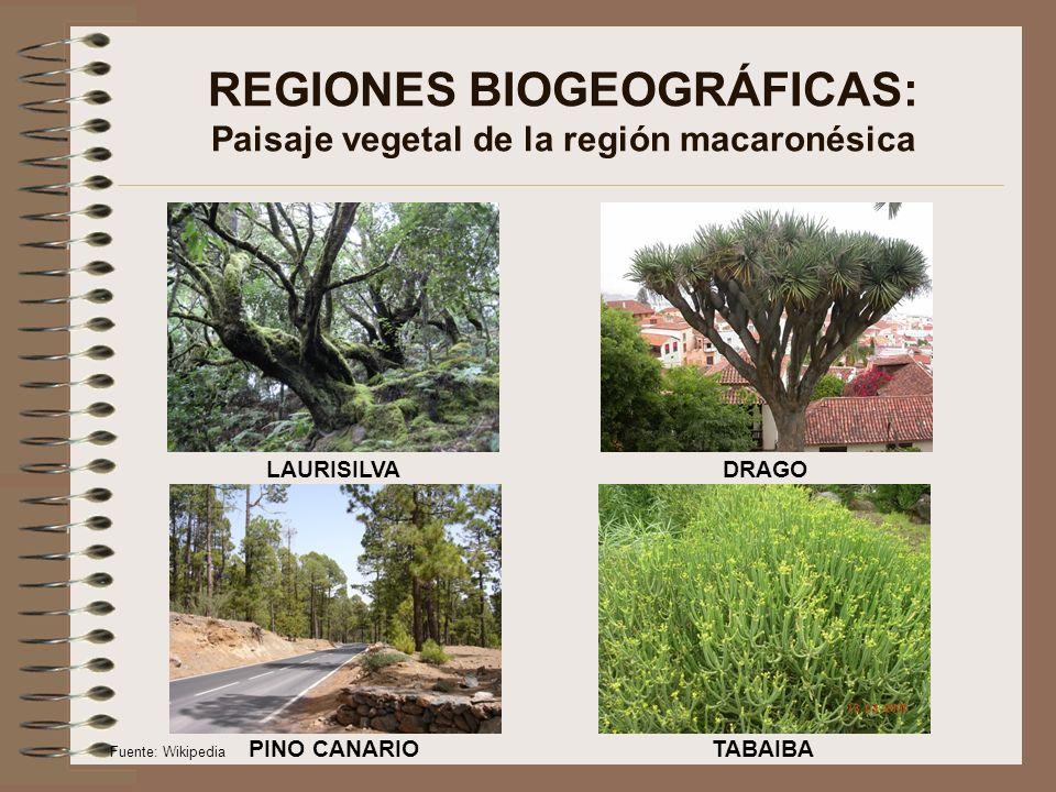 REGIONES BIOGEOGRÁFICAS: Paisaje vegetal de la región macaronésica
