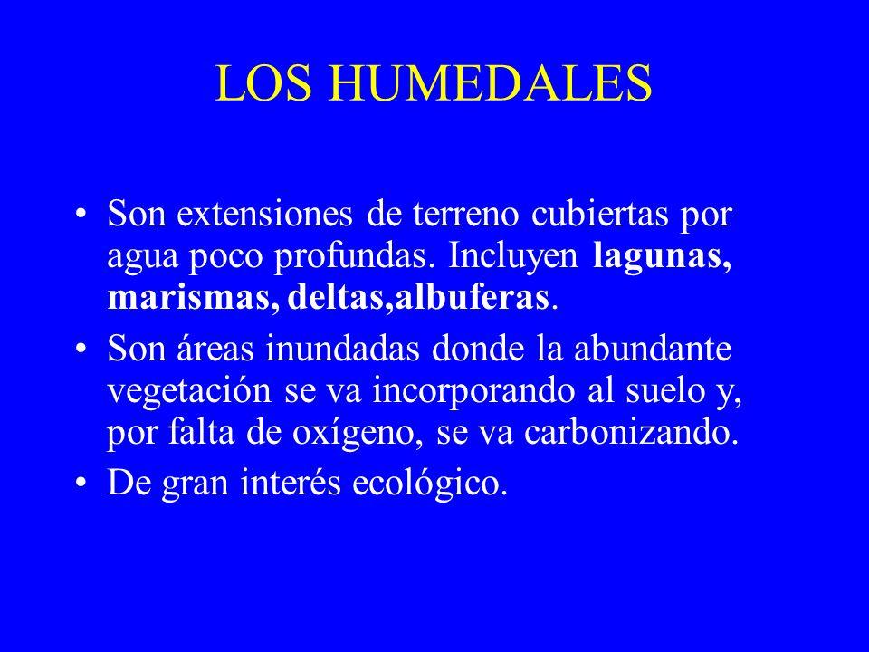 LOS HUMEDALES Son extensiones de terreno cubiertas por agua poco profundas. Incluyen lagunas, marismas, deltas,albuferas.