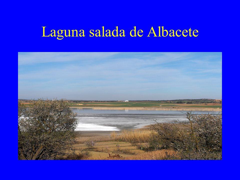 Laguna salada de Albacete