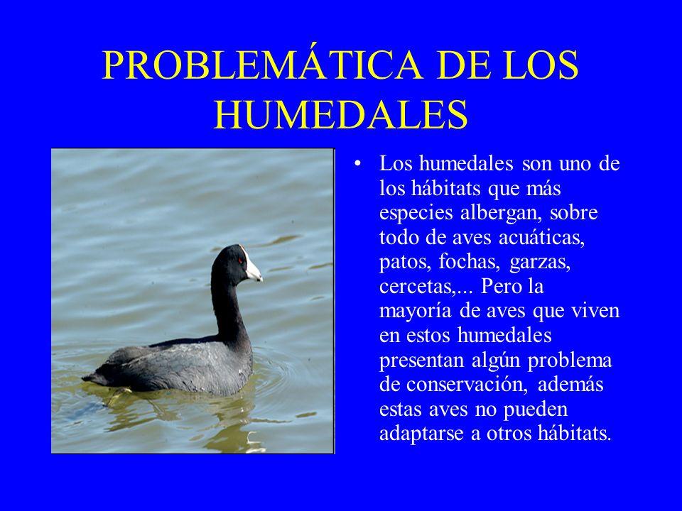 PROBLEMÁTICA DE LOS HUMEDALES