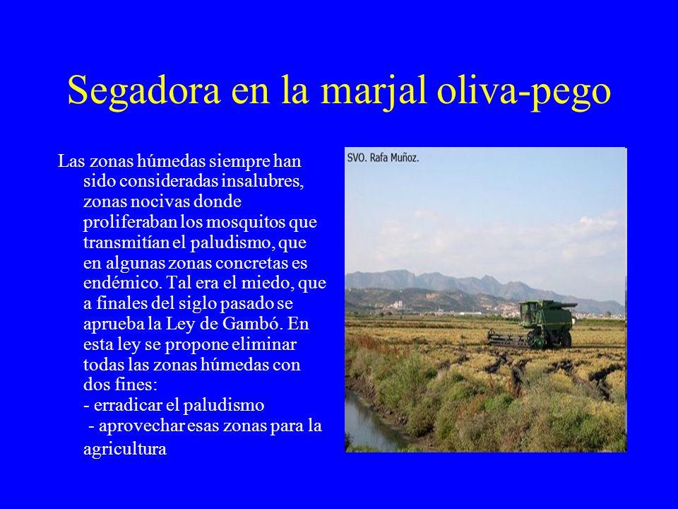 Segadora en la marjal oliva-pego
