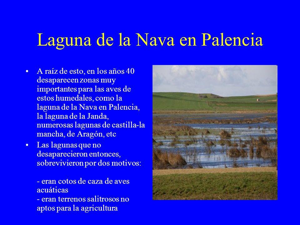 Laguna de la Nava en Palencia