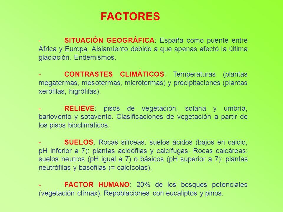 FACTORES SITUACIÓN GEOGRÁFICA: España como puente entre África y Europa. Aislamiento debido a que apenas afectó la última glaciación. Endemismos.