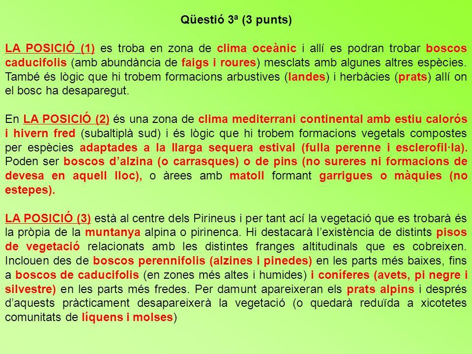 Qüestió 3ª (3 punts)