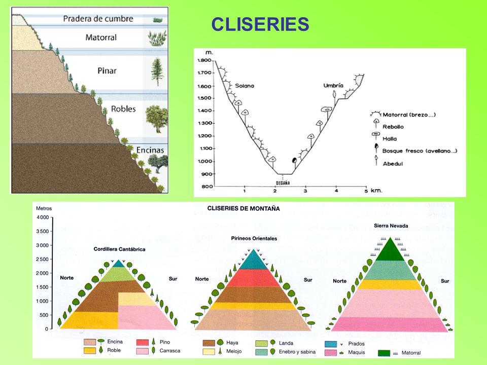 CLISERIES