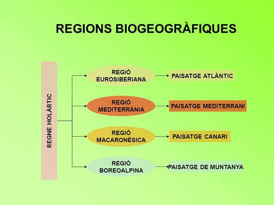REGIONS BIOGEOGRÀFIQUES