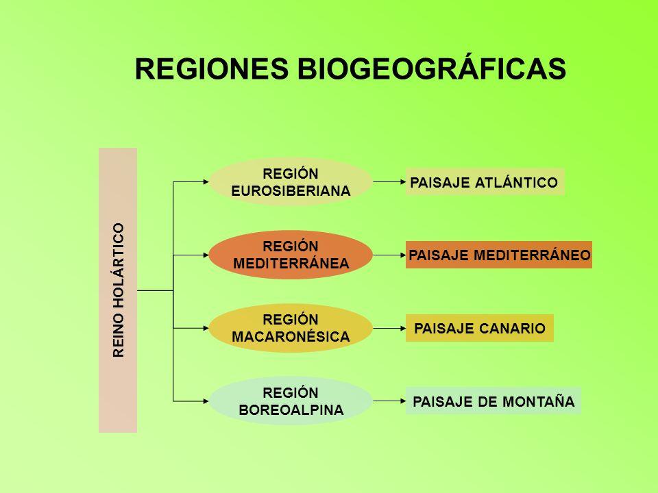 REGIONES BIOGEOGRÁFICAS