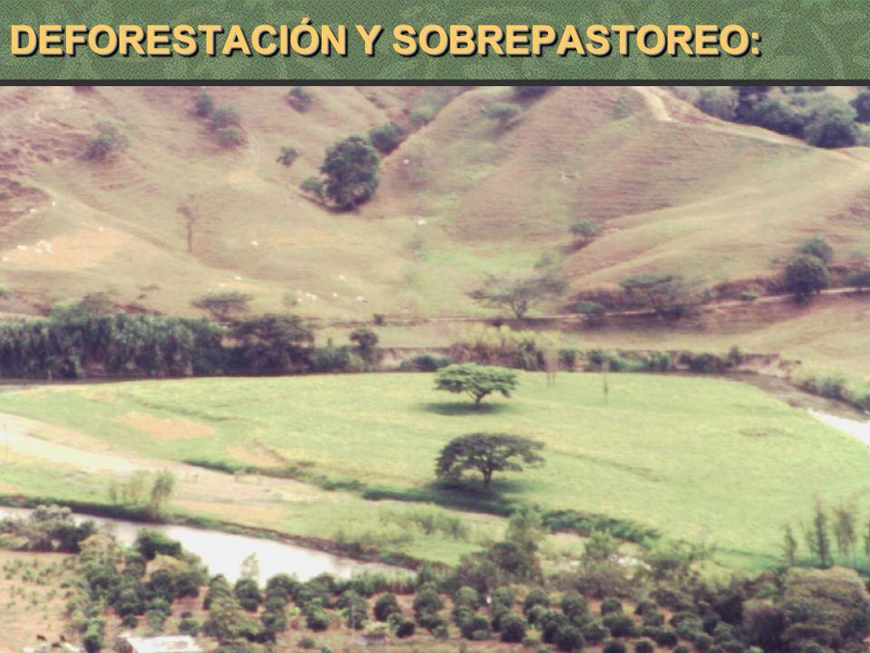 DEFORESTACIÓN Y SOBREPASTOREO: