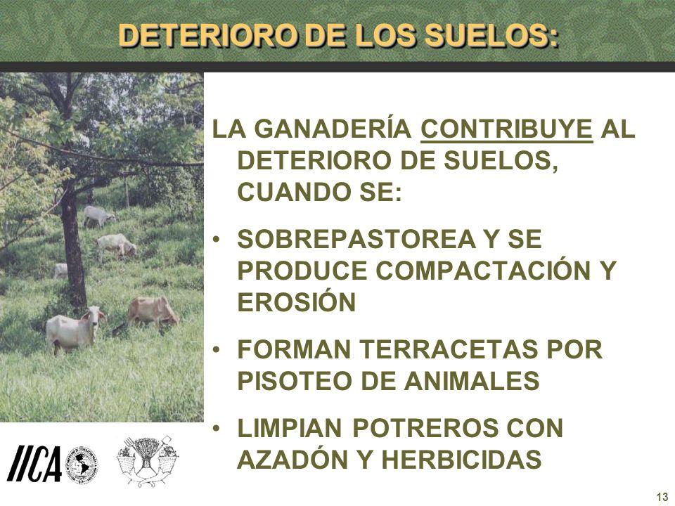 DETERIORO DE LOS SUELOS: