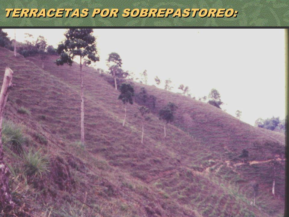 TERRACETAS POR SOBREPASTOREO: