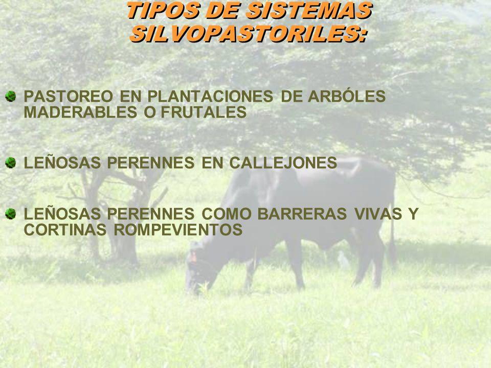 TIPOS DE SISTEMAS SILVOPASTORILES: