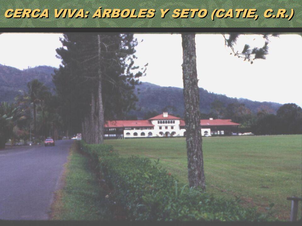 CERCA VIVA: ÁRBOLES Y SETO (CATIE, C.R.)