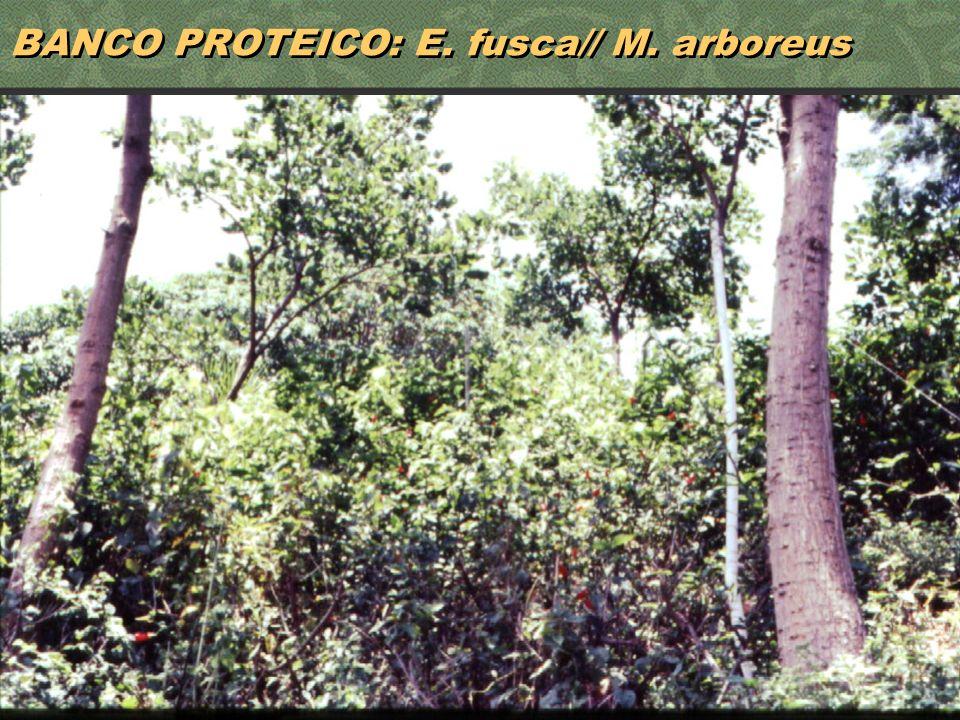 BANCO PROTEICO: E. fusca// M. arboreus