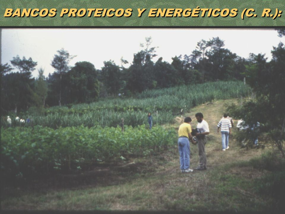 BANCOS PROTEICOS Y ENERGÉTICOS (C. R.):