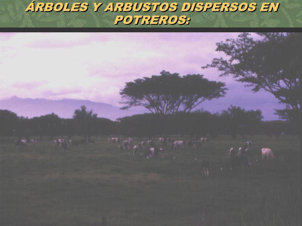 ÁRBOLES Y ARBUSTOS DISPERSOS EN POTREROS: