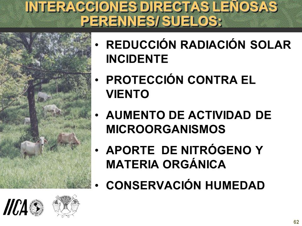 INTERACCIONES DIRECTAS LEÑOSAS PERENNES/ SUELOS: