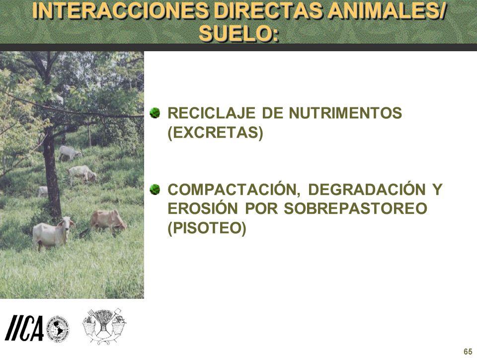 INTERACCIONES DIRECTAS ANIMALES/ SUELO: