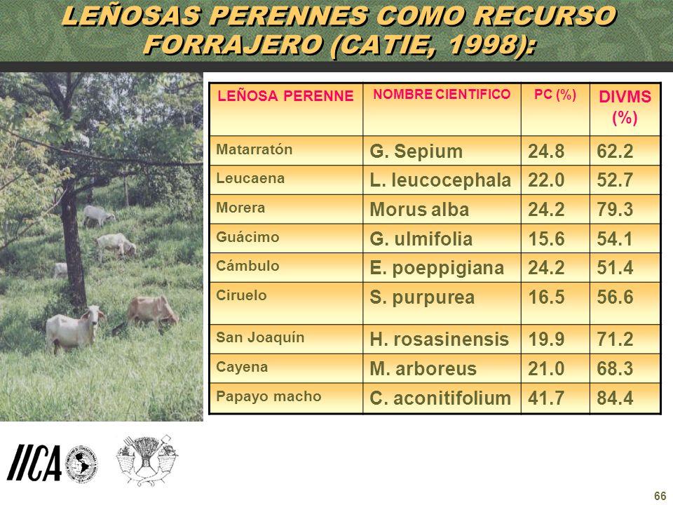 LEÑOSAS PERENNES COMO RECURSO FORRAJERO (CATIE, 1998):