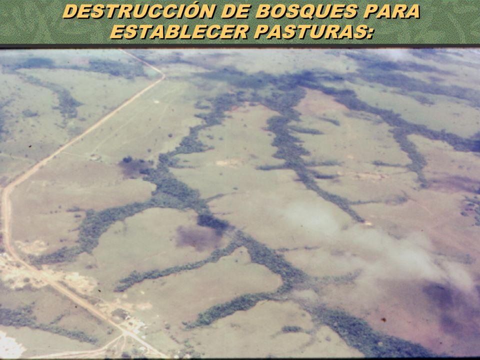 DESTRUCCIÓN DE BOSQUES PARA ESTABLECER PASTURAS: