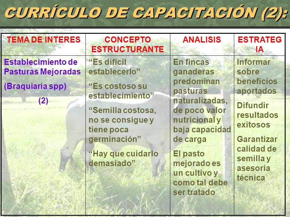CURRÍCULO DE CAPACITACIÓN (2):