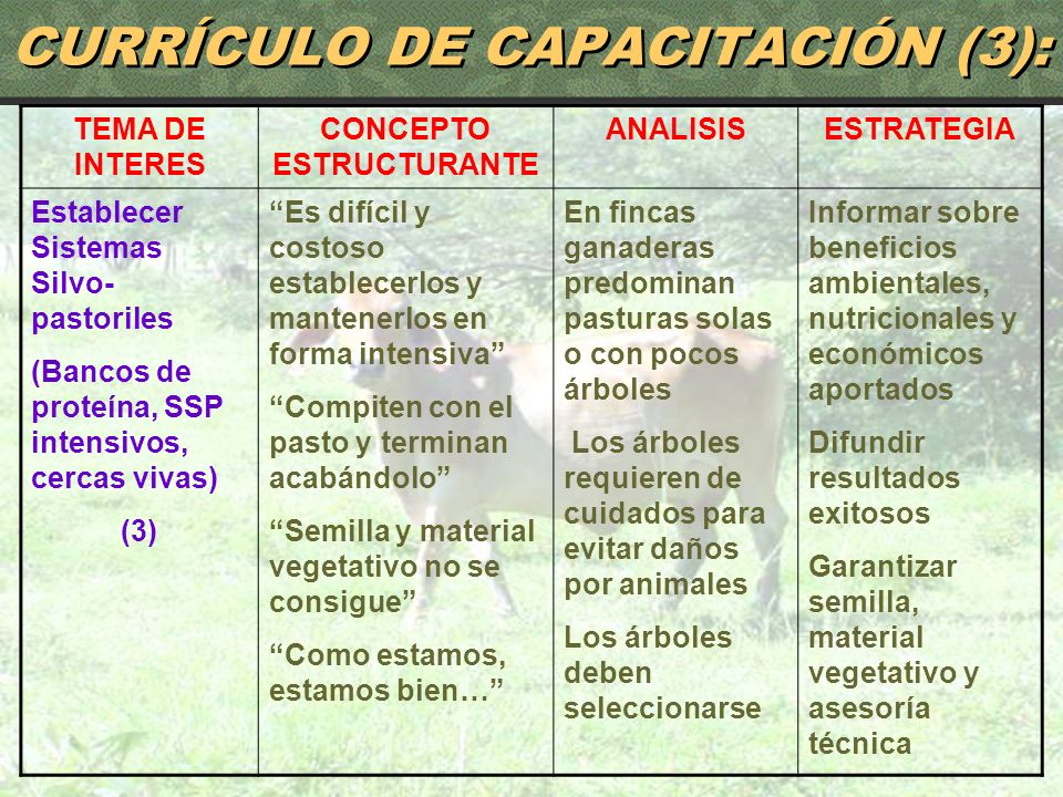 CURRÍCULO DE CAPACITACIÓN (3):