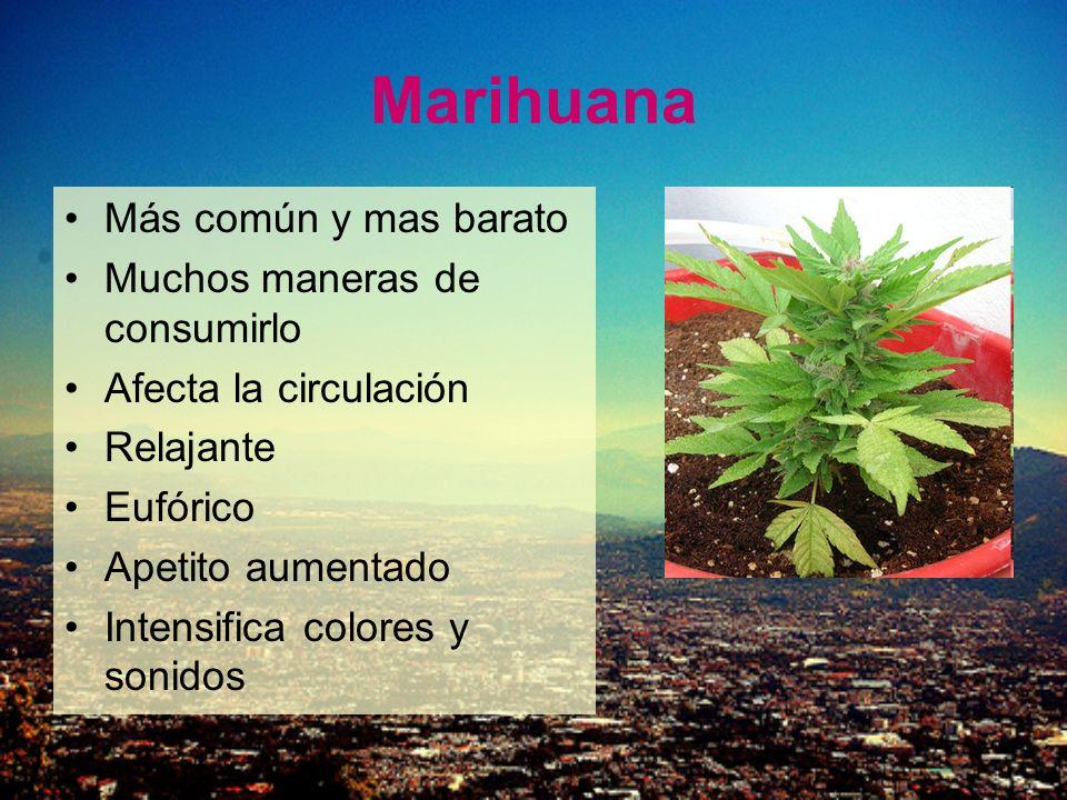 Marihuana Más común y mas barato Muchos maneras de consumirlo