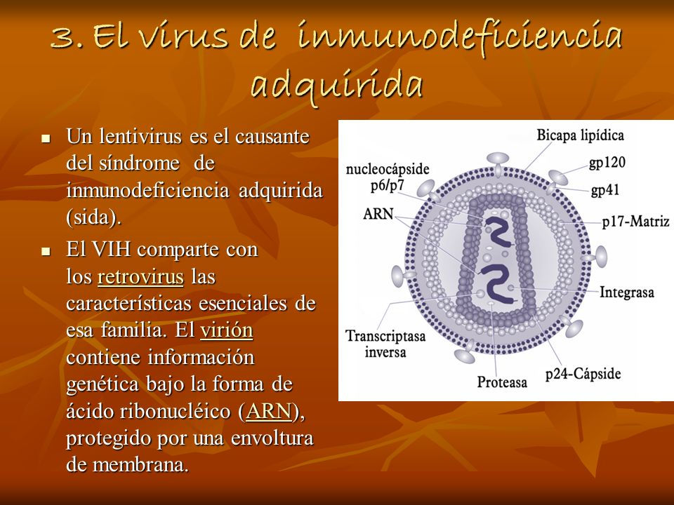 3. El virus de inmunodeficiencia adquirida