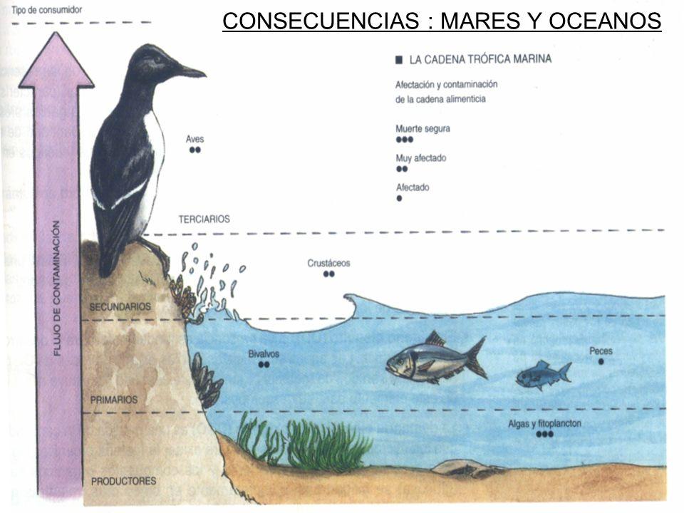 CONSECUENCIAS : MARES Y OCEANOS