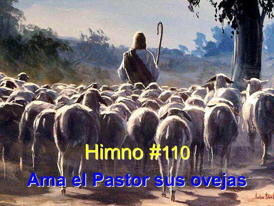 Ama el Pastor sus ovejas