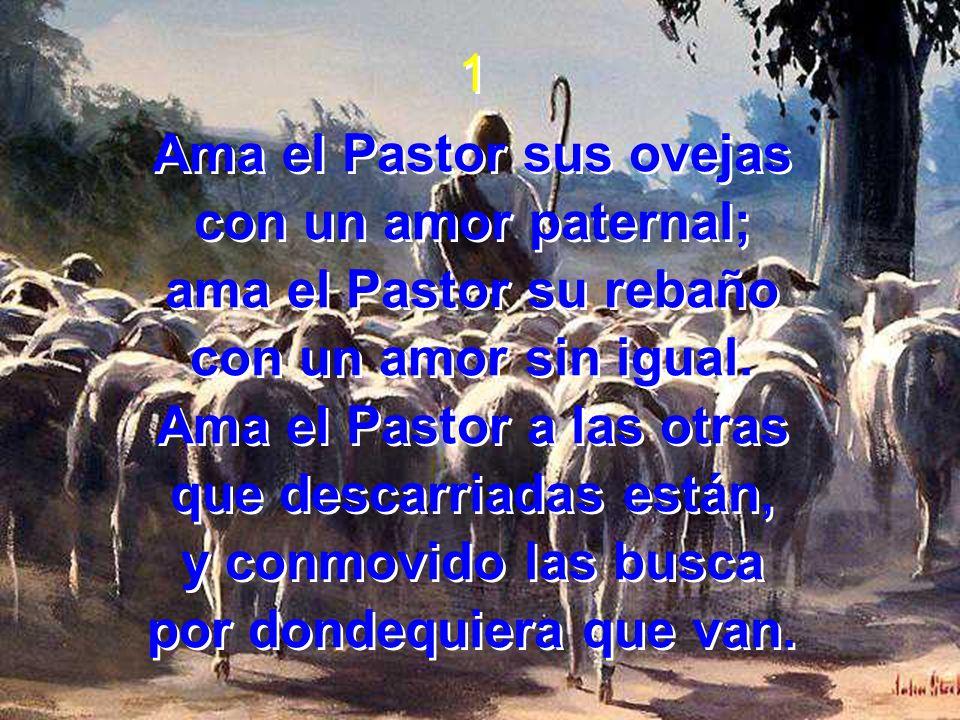 Ama el Pastor sus ovejas con un amor paternal; ama el Pastor su rebaño