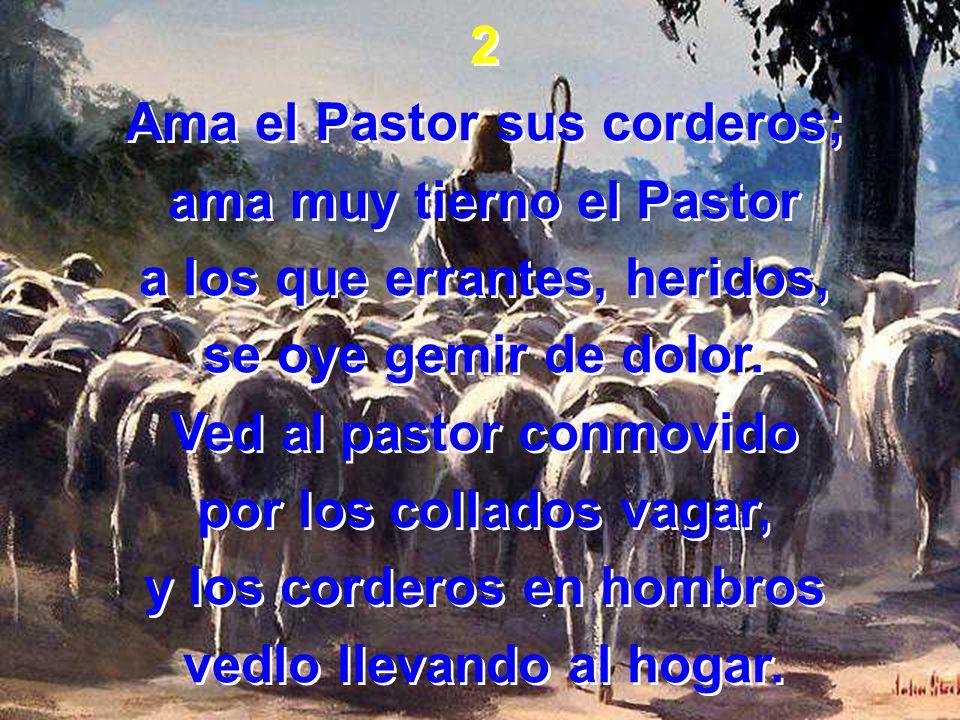 Ama el Pastor sus corderos; ama muy tierno el Pastor