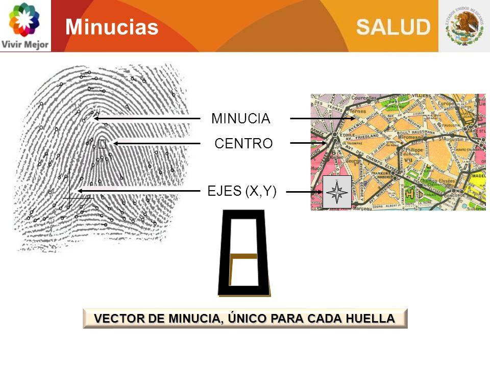 VECTOR DE MINUCIA, ÚNICO PARA CADA HUELLA