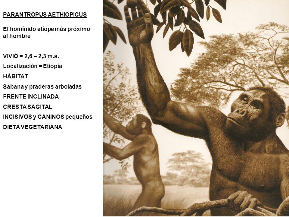 PARANTROPUS AETHIOPICUS