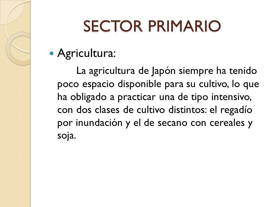 SECTOR PRIMARIO Agricultura: