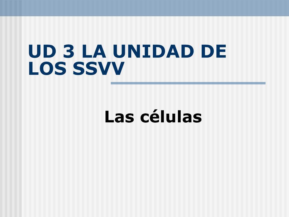 UD 3 LA UNIDAD DE LOS SSVV Las células