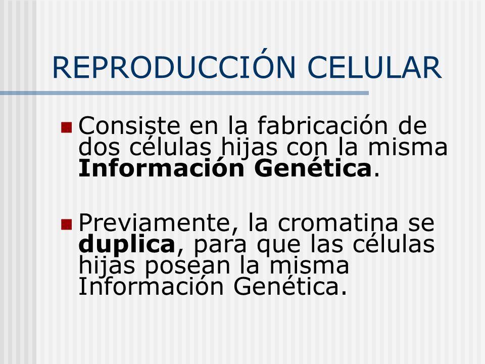 REPRODUCCIÓN CELULAR Consiste en la fabricación de dos células hijas con la misma Información Genética.
