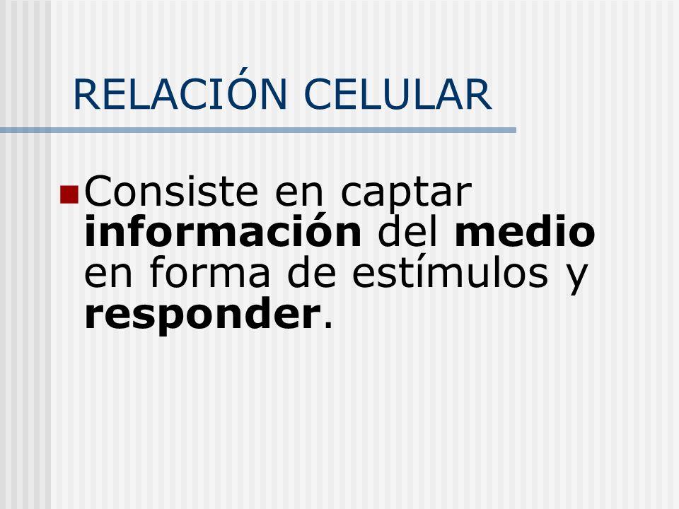 RELACIÓN CELULAR Consiste en captar información del medio en forma de estímulos y responder.