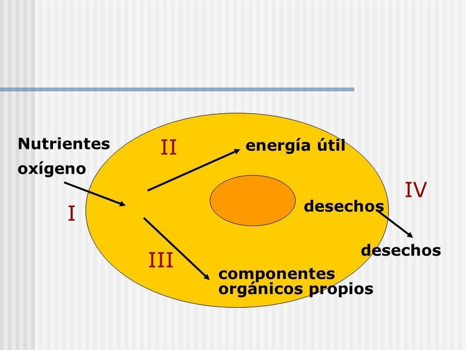 II IV I III Nutrientes energía útil oxígeno desechos desechos