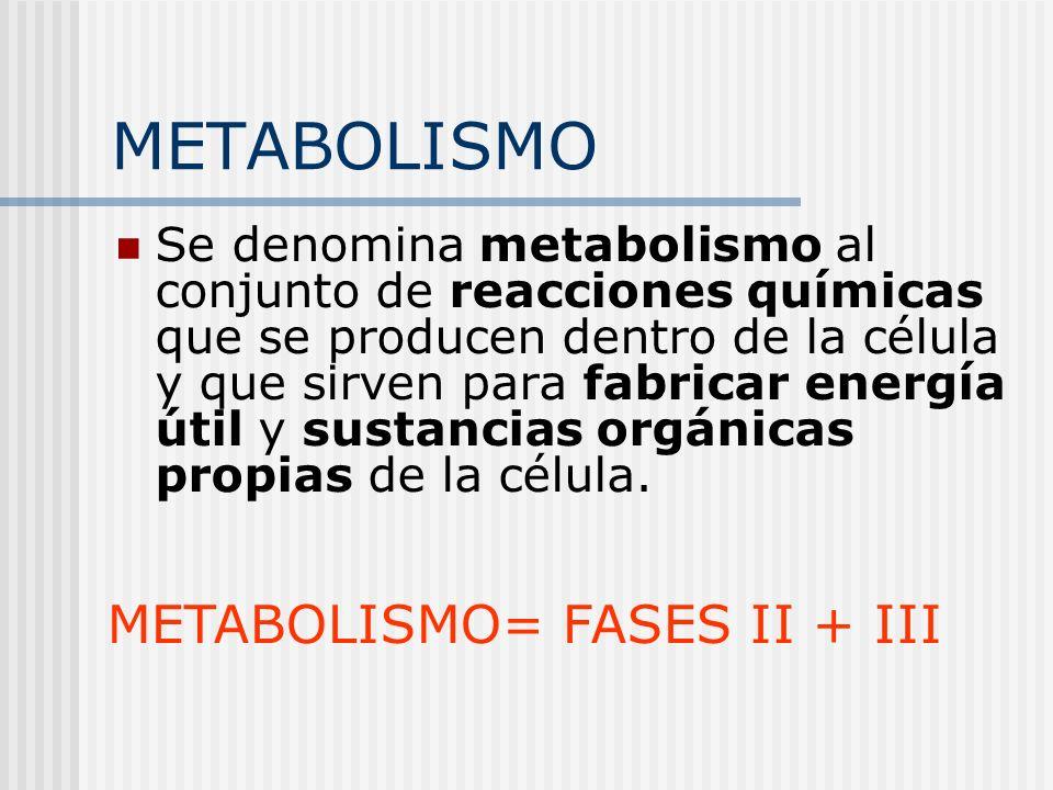 METABOLISMO METABOLISMO= FASES II + III