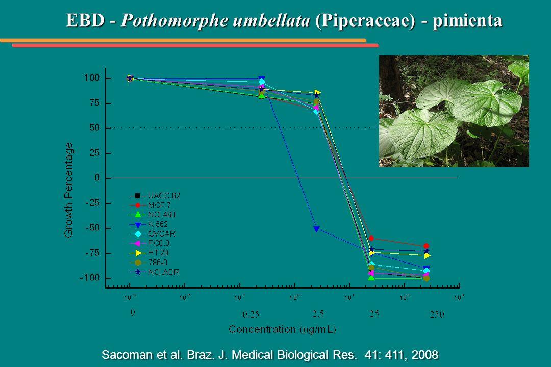 EBD - Pothomorphe umbellata (Piperaceae) - pimienta